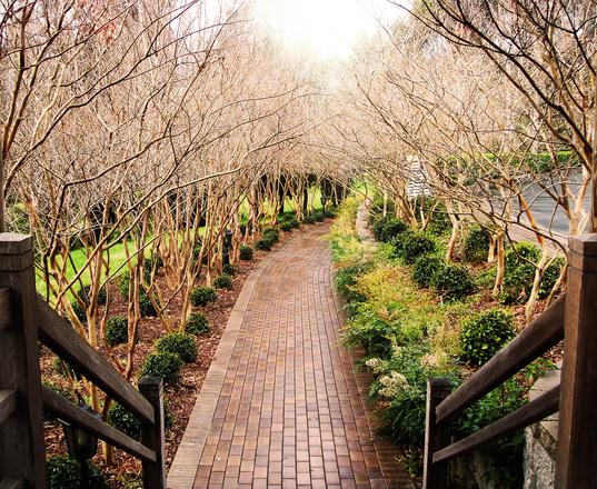 pathway-1309303.jpg